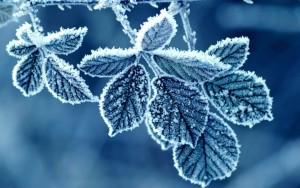 IlFilarino_filati-Katia_sweet_home_winter.JPG